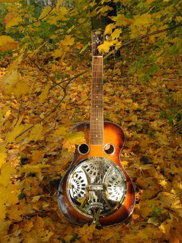 Dobro Regal RD - 40VS